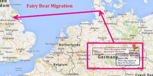 Fairy Bear migration